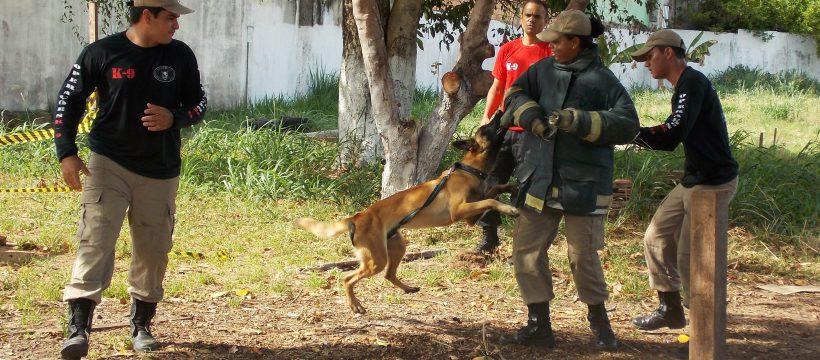 Curso de capacitação para adestramento de cães é realizado em Santarém no 4º GBM