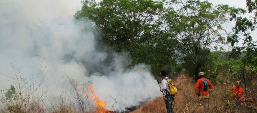 Militares do 4º GBM participam de combate a incêndio florestal em Monte Alegre.