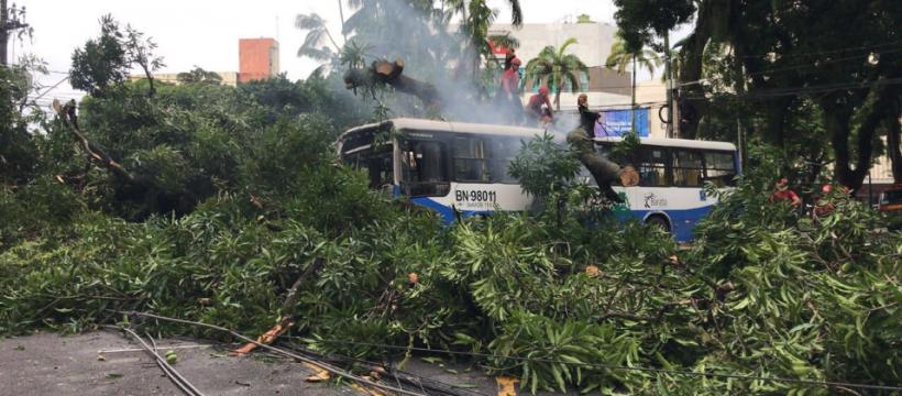 Corpo de Bombeiros realiza retirada de árvore e resgate de vítima