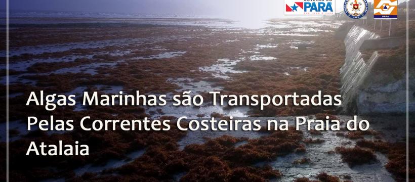 ALGAS MARINHAS SÃO TRANSPORTADAS PELAS CORRENTES COSTEIRAS NA PRAIA DO ATALAIA